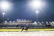 November 1-3, 2018: Breeders' Cup Horse Racing World Championships. Summering