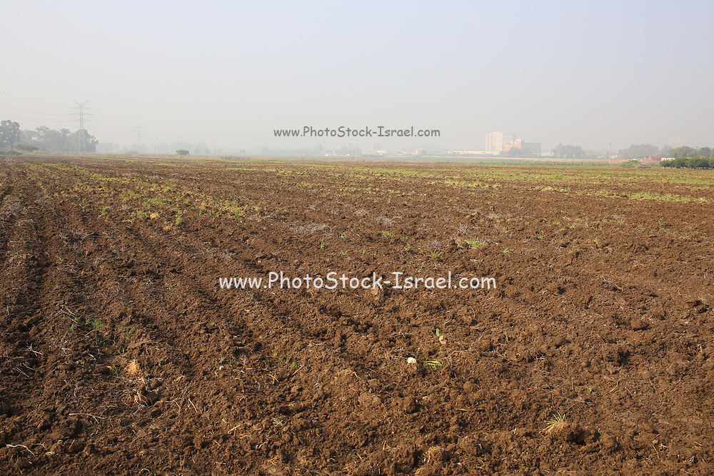 Fertile agricultural farmland after winter rain.