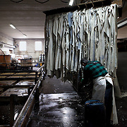 Ponte a Egola, Italy. Lamonti Cuoio tannery SPA. Skins at the phase of slow tanning in the tank. This type of tanning lasts several days. The vegetable tannins penetrate the skin, making them very durable. This is how leather for shoe soles is created.