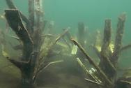 Fishiding Artificial Fish Attractors<br /> <br /> Engbretson Underwater Photography