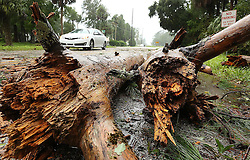 A fallen tree partially blocks Front Street as Hurricane Matthew blows into Astor on Friday, October 7, 2016. (Stephen M. Dowell/Orlando Sentinel/TNS/ABACAPRESS.COM
