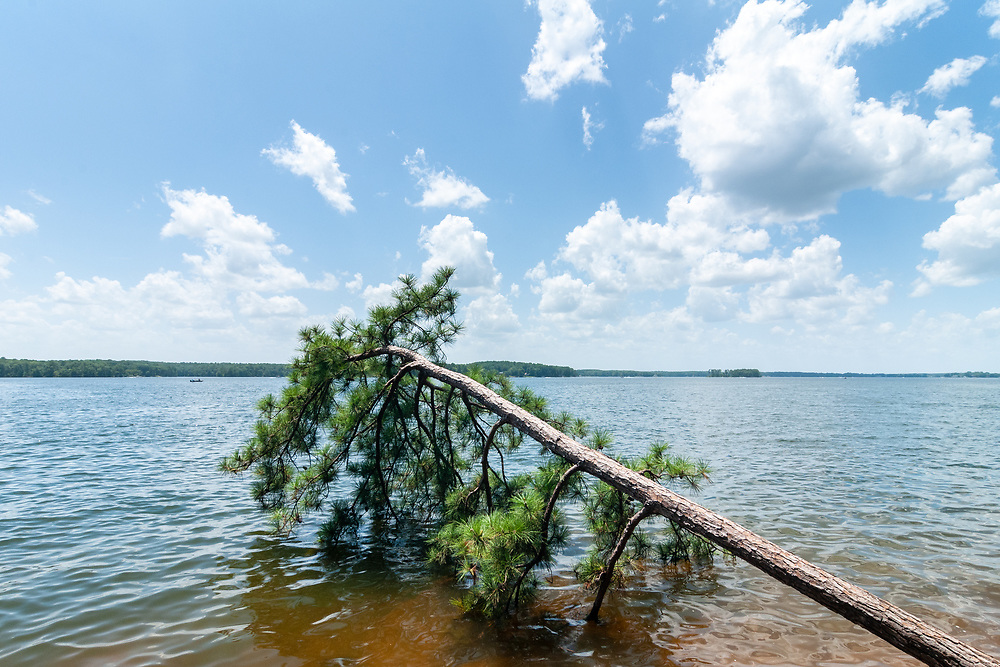 A fallen tree at the edge of Lake Murray at Dreher Island State Park in Prosperity, South Carolina on Sunday, August 2, 2020. Copyright 2020 Jason Barnette