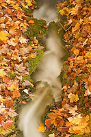 Small stream and dead leaves, Plitvice National Park, Croatia