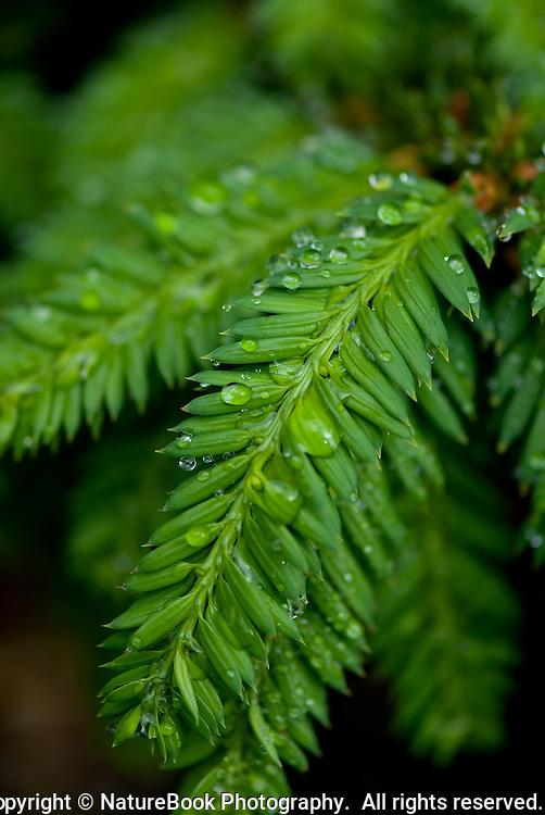 A rich green garden plant glistens after a brief rain shower.