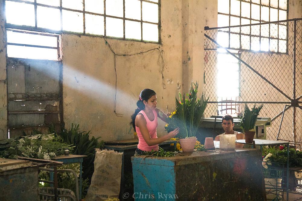 Woman arranging flowers, Mercado Agropecuario Cuatros Caminos, Havana, Cuba