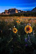 Wildflowers in Glacier Natioanal Park
