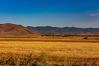 landscape panorama at sunset of <br /> Wheat field near Vardenis landmark of Gegharkunik Armenia eastern Europe