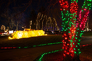 Lights wrapped around trees and shinning on plume bushes are visible at the Way of Lights holiday light display at the National Shrine of Our Lady of the Snows in Belleville on December 3, 2019. This is the 50th anniversary of the annual light display, which runs from 5 pm to 9 pm through December 31.<br />Photo by Tim Vizer