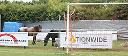 Portchester,Hampshire Wednesday 25th May 2016 A charity football match was thrown into doubt after travellers broke into a sports ground car park late night (Tuesday)<br /> The Portchester AFC are set to host up to 1,7000 football fans at the recreation ground on Saturday as Portsmouth footballers take on Glasgow Rangers in aid of Help for Heroes. A very tired spokesman for the club who spent the night at the club said its full speed ahead<br /> <br /> Police were on the site this morning and are liaising with Fareham Borough Council officers on moving the group on. The group who have been told that Police would serve a section 61 notice if they hadn't moved by 2pm this afternoon.<br /> Councillor Sean Woodward, leader of Fareham Borough Council, said police would be issuing an order this afternoon instructing the travellers would need to leave - or they would be forced on.<br /> Travellers, in a convoy of eight caravans, arrived at the Wicor recreation ground in Portchester last night, sawing through wooden bollards to gain access.<br /> Police and Fareham Council officials arrived on site this morning and have been successful in moving the convoy on. Other locals have also been effected One thought that group may have snatched her horse kept in a near by field. Kind hearted managers at the local ground kept guard after letter the woman move the horses into the football pitch in the late hours.@UKNIP