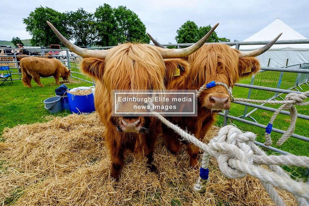 Biggar, South Lanarkshire, Scotland 23 July 2016<br /> <br /> Preparing highland cattle for showing.<br /> <br /> <br /> (c) Andrew Wilson   Edinburgh Elite media