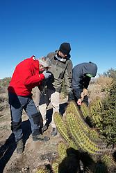 Scott, Matt & Nick Checking Out Cactus