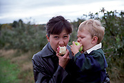 Mother and son picking apples at a Upstate New York U Pick It Farm.