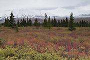Fall color and the mountains of The Alaska Range, Denali National Park, Alaska