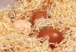 THEMENBILD - braune Hühnereier in einem Nest aus Holzwolle, aufgenommen am 02. März 2018, Kaprun, Österreich // brown chicken eggs lie in a nest of wood wool on 2018/03/02, Kaprun, Austria. EXPA Pictures © 2018, PhotoCredit: EXPA/ Stefanie Oberhauser
