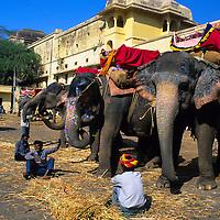 Asia, India, Rajasthan. Painted Elephants at Amber Palace