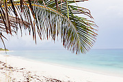 A palm frond hangs over the pink sands of Long beach Hope Town, Elbow Cay Abacos, Bahamas.