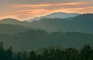 Sunset over the Coastal Forest a privately   owned forest being managed in s sustainable manner.