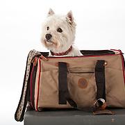 20101209 Medium Dogs