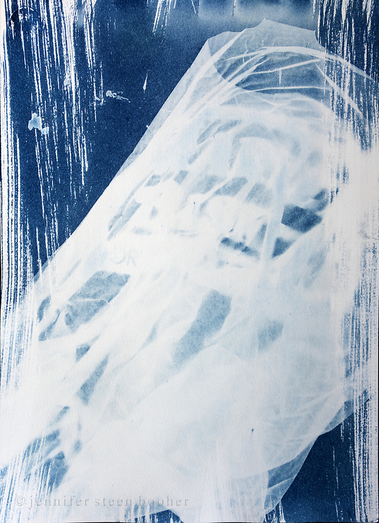 Scanned image of an original cyanotype. Prints ordered through the website will be C-prints of the scanned image. Please contact me if you are interested in purchasing the original.