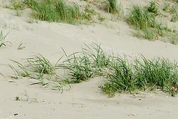 Ijmuiden, duin, strand en zee