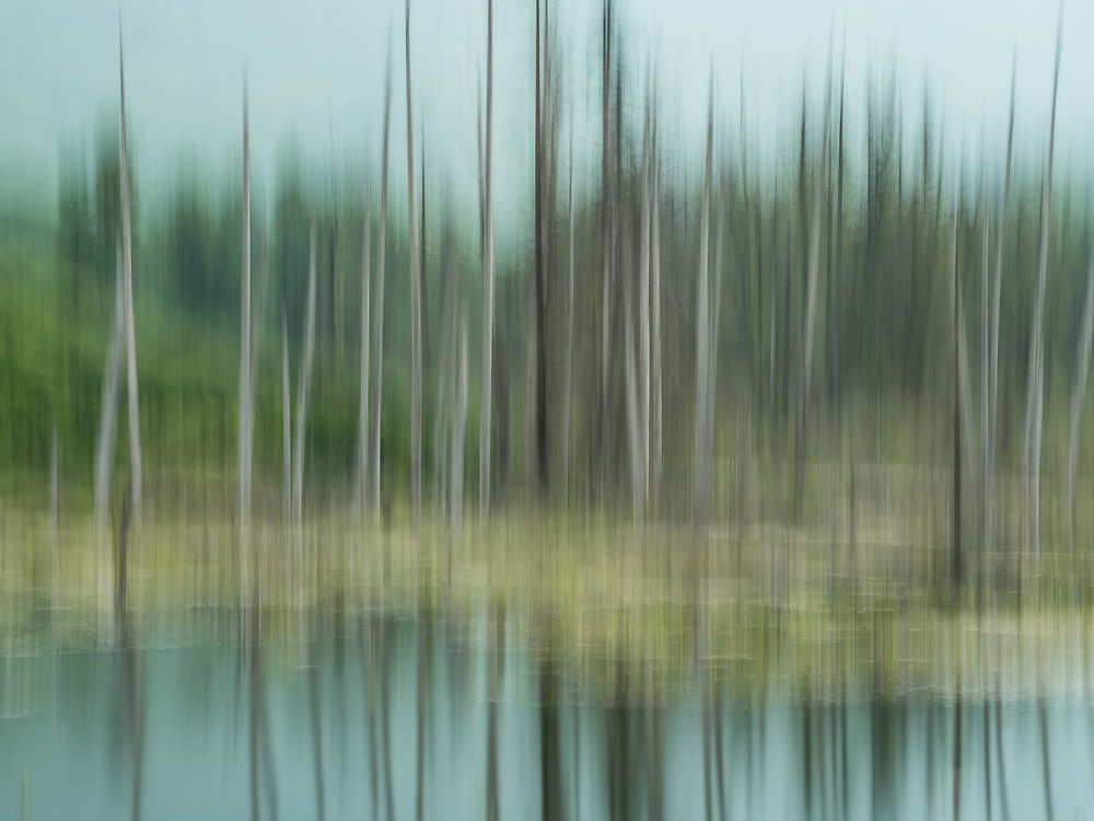 In-camera motion blur of forest and pond near Valdez in Southcentral Alaska. Summer. Morning.