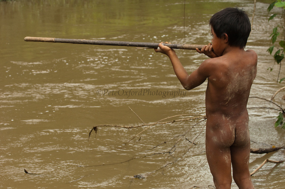 Huaorani Indian boy with his blowgun. Gabaro Community. Yasuni National Park.<br /> Amazon rainforest, ECUADOR.  South America<br /> They learn to hunt from an early age by using shorter blowguns, lances and spears.<br /> This Indian tribe were basically uncontacted until 1956 when missionaries from the Summer Institute of Linguistics made contact with them. However there are still some groups from the tribe that remain uncontacted.  They are known as the Tagaeri & Taromenani. Traditionally these Indians were very hostile and killed many people who tried to enter into their territory. Their territory is in the Yasuni National Park which is now also being exploited for oil.
