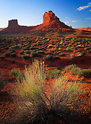 Cracked earth and bushes in Valley of the Gods, Utah