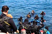 Scuba Diving at Casino Point Dive Park Catalina Island