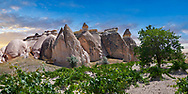 Pictures & images of vines growing near rock formations  near Goreme, Cappadocia, Nevsehir, Turkey .<br /> <br /> If you prefer to buy from our ALAMY PHOTO LIBRARY  Collection visit : https://www.alamy.com/portfolio/paul-williams-funkystock/cappadociaturkey.html (TIP refine search - type which part of Cappadocia into the LOWER search box)<br /> <br /> Visit our TURKEY PHOTO COLLECTIONS for more photos to download or buy as wall art prints https://funkystock.photoshelter.com/gallery-collection/3f-Pictures-of-Turkey-Turkey-Photos-Images-Fotos/C0000U.hJWkZxAbg