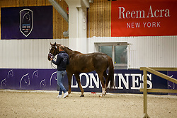 Minderhoud Hans Peter, (NED), Glock's Flirt<br /> Horse Inspection<br /> Reem Acra FEI World Cup Dressage Finals 2016<br /> © Hippo Foto - Dirk Caremans<br /> 24/03/16