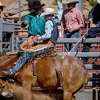 Saddle bronc rider Jett Smith holds on as his horse jumps from the chute during the second round of the New Mexico High School Finals rodeo at Red Rock Park in Gallup Saturday.