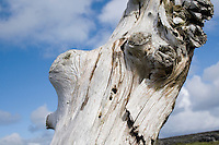 driftwood on Inis Oirr Island the Aran Islands County Galway Ireland