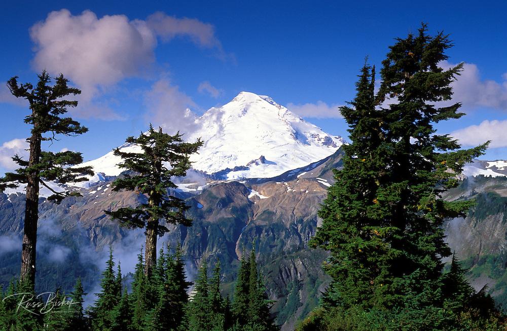 Morning light on Mount Baker, Mount Baker-Snoqualmie National Forest, North Cascades, Washington USA