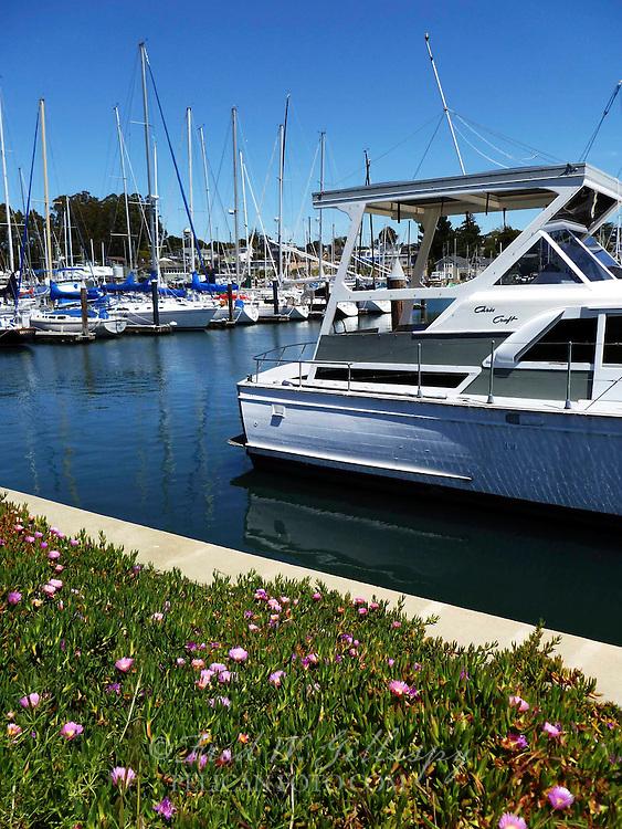 Santa Cruz Harbor 0291