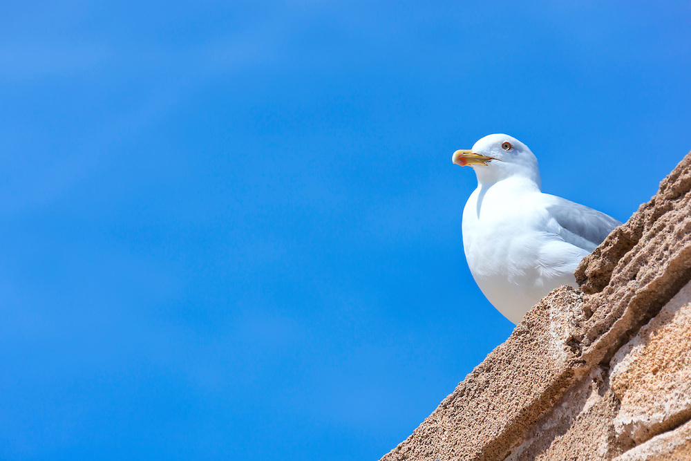 Seagull on wall against clear blue sky.