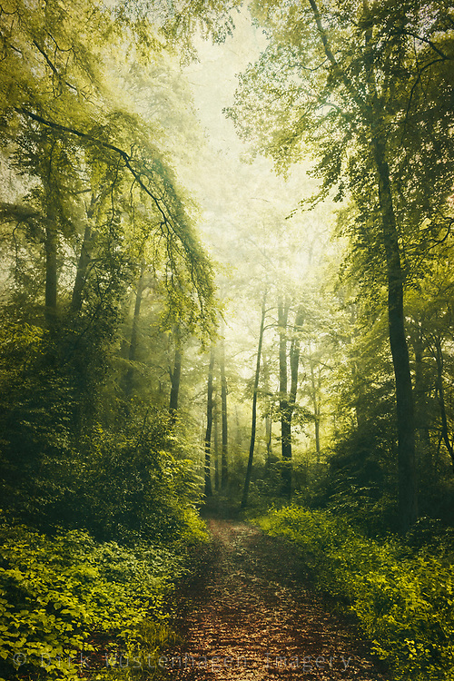 Hike through a deciduous forest on a misty Summer morning<br /> Redbubble products: https://www.redbubble.com/shop/ap/80159989