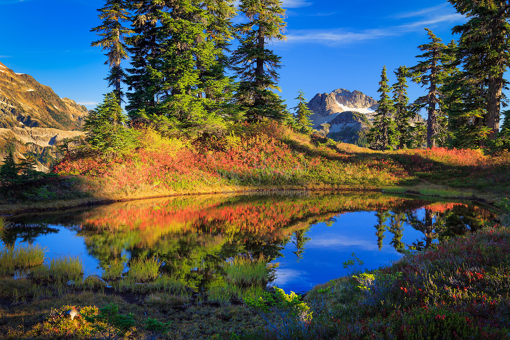 Conifers and blueberry shrubs in fall color at a tarn near Mount Shuksan in Washington state, USA