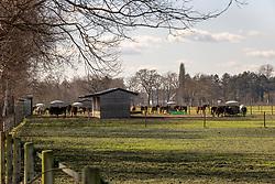 Van Den Bosch Paul, BEL<br /> Stoeterij Berghoeve - Balen 2021<br /> © Hippo Foto - Dirk Caremans<br /> 19/03/2021