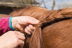 Woman's hands making braids of horse hair, Bavaria, Germany
