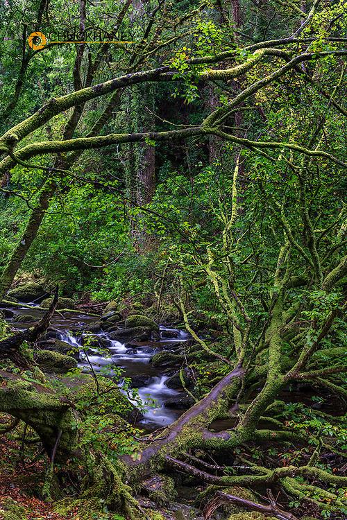 Lush moss along Torq Creek in Killarney National Park, Ireland