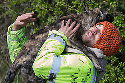 A young dog shows its affection for a Stop HS2 activist trying to protect mature oak trees from felling to construct a temporary access road for the HS2 high-speed rail link on 26th April 2021 in Quainton, United Kingdom. Environmental activists continue to oppose the controversial HS2 project from a series of protection camps along its Phase 1 route between London and Birmingham.