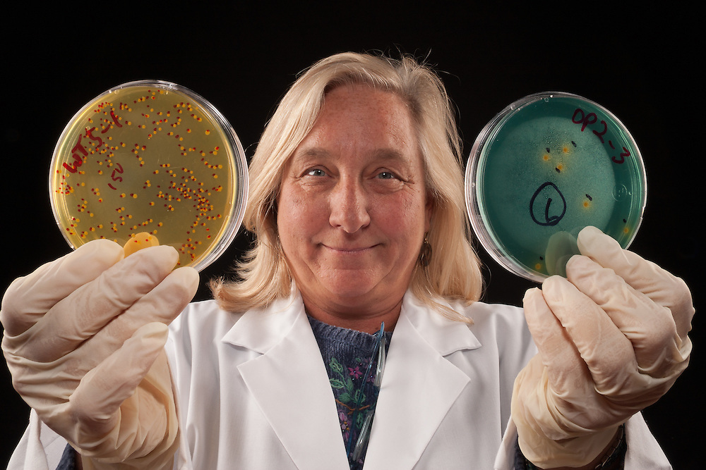 """Vibrio vulnificus infections in humans can be very serious, and life threatening disease is often associated with consumption of raw oysters. Our research investigates the interactions of this bacterium with these molluscan shellfish. We specifically deleted to (I think she meant """"two"""") bacterial genes required for expression of structures such as polysaccharides, pili, and flagella, and developed an oyster model of infection to investigate their role in uptake and survival in oysters. This picture illustrates that colonies of the mutant strains (green plates with very few yellow colonies are recovered at significantly lower numbers compared to wild type bacteria (many yellow colonies), following infection studies. We are currently investigating natural compounds that may also interfere with this process and will use the research to develop novel post-harvest technology that will reduce the public health risk associated with oysters."""
