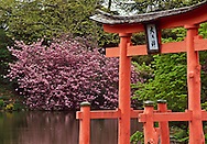 Cherry Blossoms, Brooklyn Botanic Garden, Brooklyn, New York, Japanese Hill and Pond Garden, Trees in Bloom
