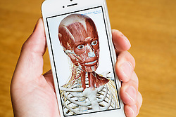 Detail of educational medical 3D human anatomy atlas on an iPhone smart phone