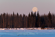 The first full moon of 2020 sets along the Tanana River near Nenana, Alaska