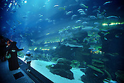Dubai, UAE, Feb 12, 2010, Dubai Aquarium and Underwater sea is the largest aquarium in the world at the Dubai Mall... PHOTO © Christophe Vander Eecken