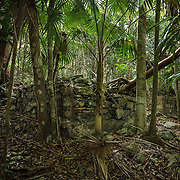 Paquerau ruin. It's a bushwhack along an old Danish road to get to these three ruins hidden in the tropical forest of St. John.