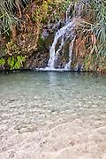 Ein Gedi sweet water springs, in the  judean desert, israel Israel, the lower waterfall in Wadi David