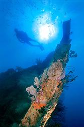 scuba diver at bow of Benwood ship wreck, Key Largo, Florida Keys NMS, Florida, Atlantic Ocean