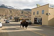 Gardiner-Montana